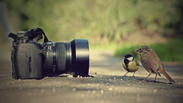 Fotoğraf Makinesi Alırken Dikkat Edilmesi Gereken Özellikler
