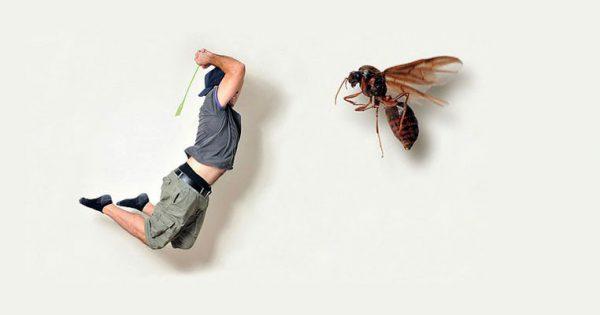 Hayvan Isırıkları, Böcek ve Yılan Sokmalarında İlk Yardım